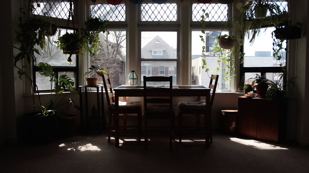 PalmerstonBlvd-1.jpg